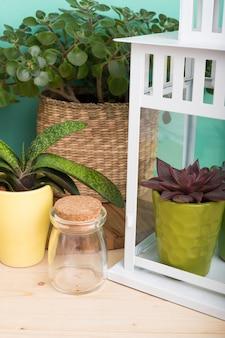 Vetplanten, kamerplanten in potten