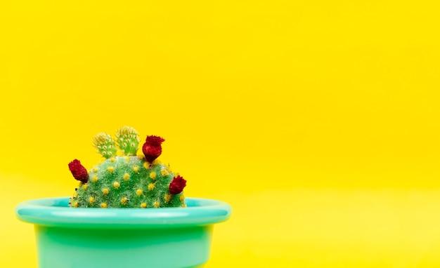 Vetplanten of cactus