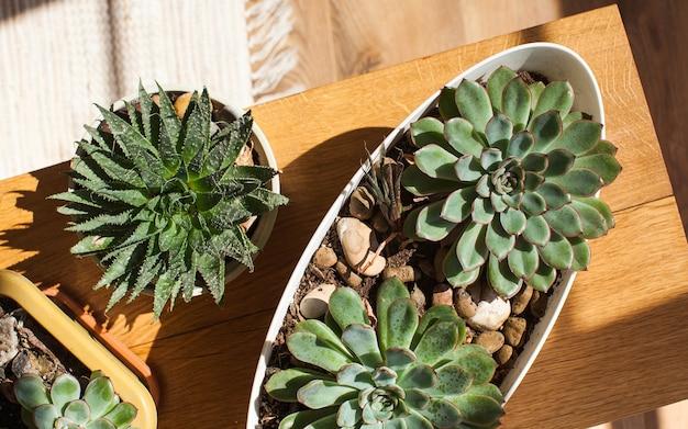 Vetplanten op een houten achtergrond. concept van huisplanten, interieurdecoratie met groene planten.