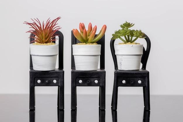 Vetplanten op een stoel staat op een zwart glazen oppervlak op een witte muur