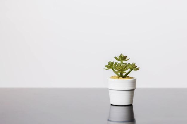 Vetplanten staat op een zwart glazen oppervlak op een wit oppervlak. scandinavisch kamerinterieur