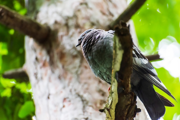 Vette duif op een boomtak