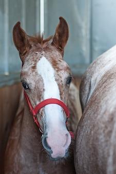 Veulen met zijn moeder in paardenboxen