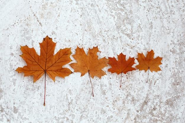 Vier esdoorn bladeren herfst familie, moeder vader en twee kinderen als oranje blad op lichte achtergrond