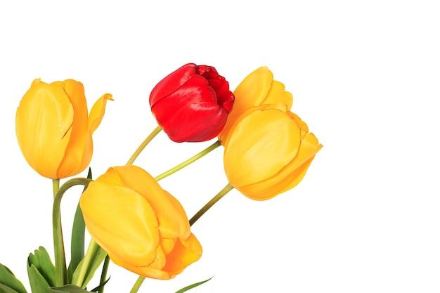 Vier gele en een rode tulp bloemen lente boeket geïsoleerd op een witte achtergrond