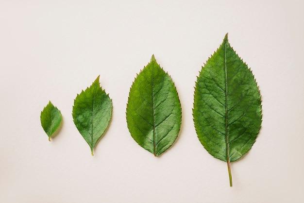 Vier groene bladeren