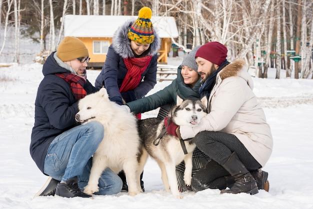 Vier mensen spelen met honden in de winter
