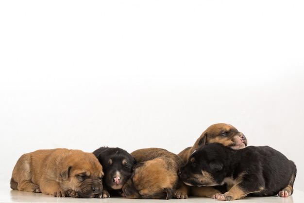 Vier puppy's die op witte achtergrond worden geïsoleerd