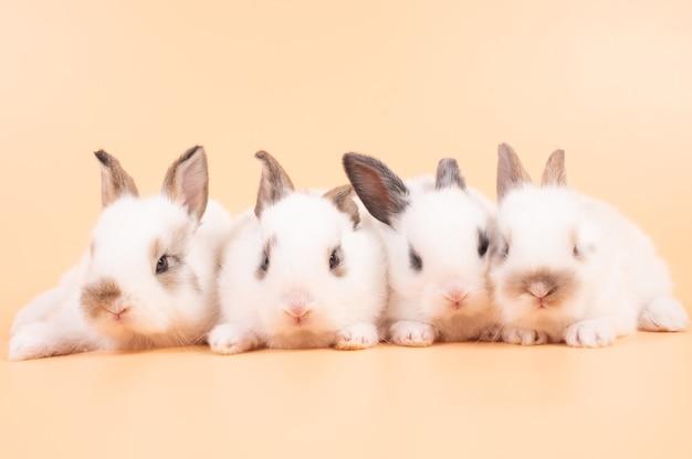Vier witte schattig konijn op gele achtergrond. groep babykonijnen zitten geïsoleerd op achtergrond