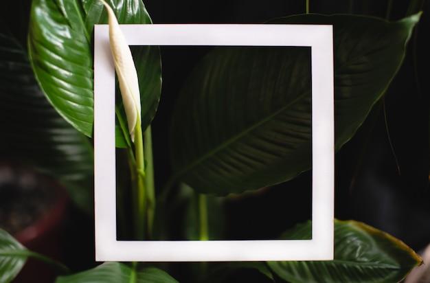 Vierkant frame op de achtergrond van groene bladeren van tropische planten. ansichtkaart over het thema van de natuur en het milieu