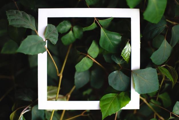 Vierkant frame op de achtergrond van groene bladeren van tropische planten. briefkaart op het thema van de natuur. tekstkader