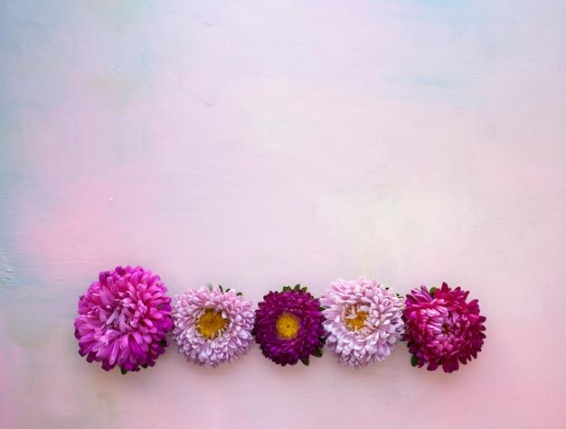 Vierkante roze houten banner met asterbloemen die in een rij liggen. plaats voor tekst.