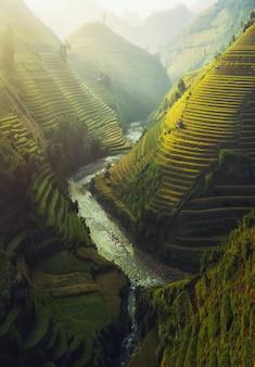 Vietnam rijst terrasvormig