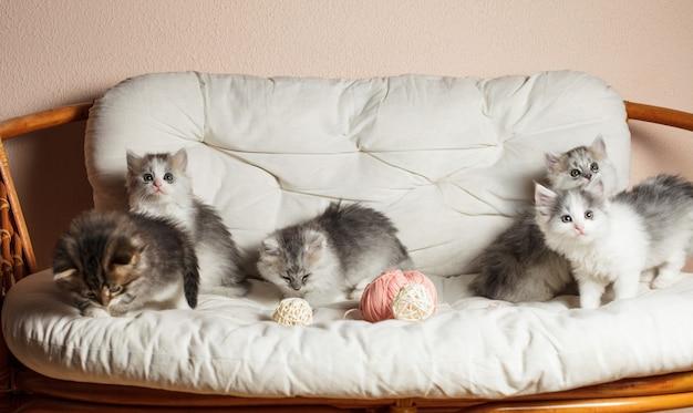 Vijf grijze kittens op het witte kussen met een roze bolletje garen