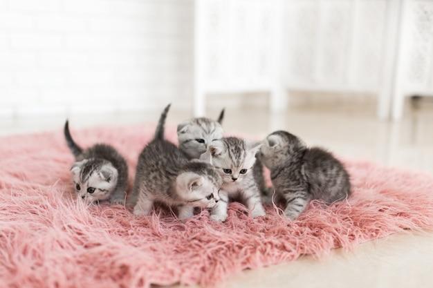 Vijf kleine grijze katjes liggen op een roze tapijt