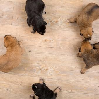 Vijf puppies bovenaanzicht