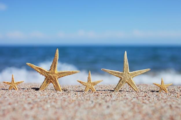 Vijf zeesterren op een zandstrand.