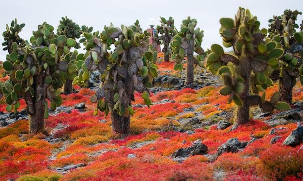 Vijgcactus op het eiland