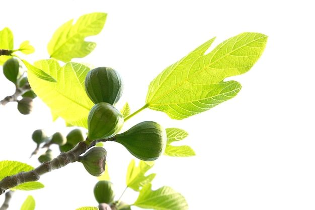 Vijgen met groene bladeren die op wit worden geïsoleerd