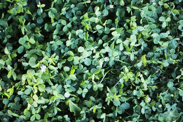 Vijver met kroos, moerasplanten, waterlelies en victoria amazonica lelies