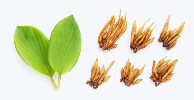 Vingerwortel met bladeren op witte achtergrond.