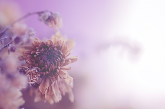 Vintage bloemen gemaakt voor achtergrond