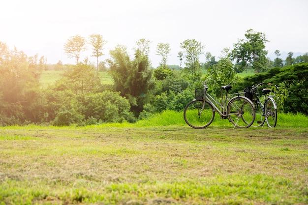 Vintage fietsen parkeren op het gazon in de tuin met natuurlijke weergaven