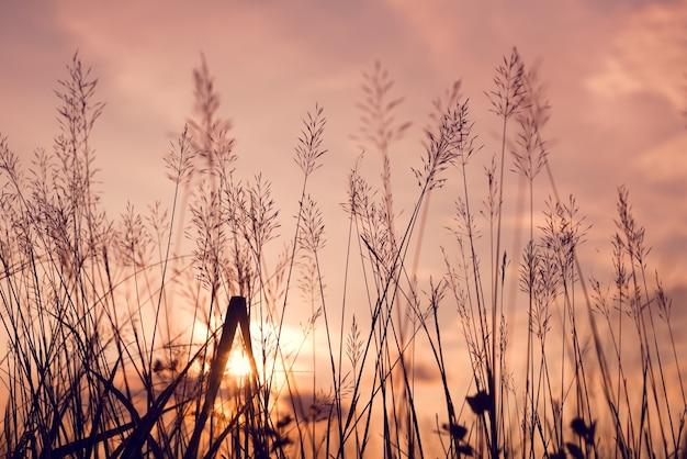 Vintage foto van abstracte avond herfst natuur achtergrond met wilde bloemen en planten in zonsondergang
