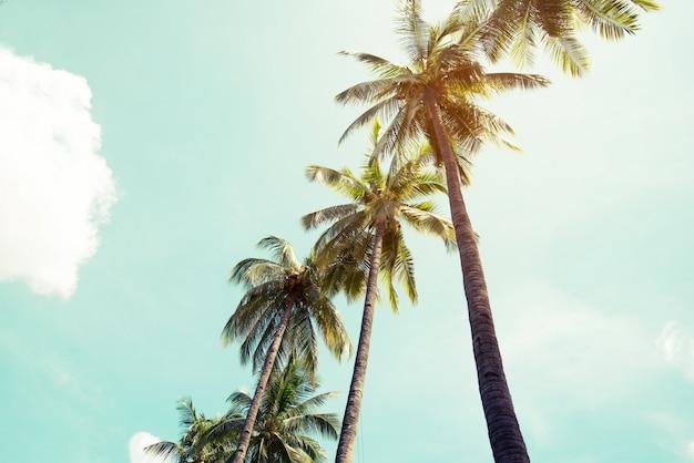 Vintage kokospalm op het strand blauwe lucht met zonlicht van de ochtend in de zomer, instagram filter