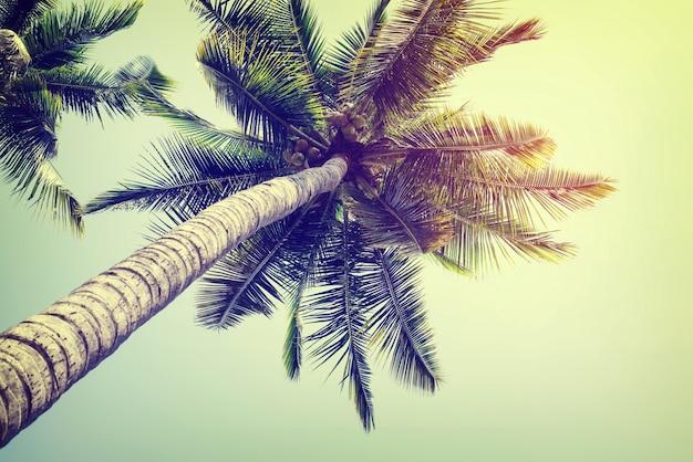 Vintage natuur achtergrond van kokospalm op het strand blauwe lucht met zonlicht van de ochtend in de zomer, instagram filter