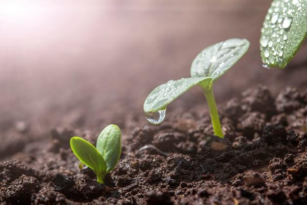 Vintage zaailing groeit op de grond in de regen.