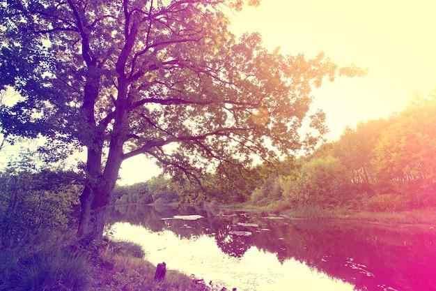 Vintage zonnestraal herfst over het meer.
