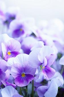 Violette bloemen achtergrond