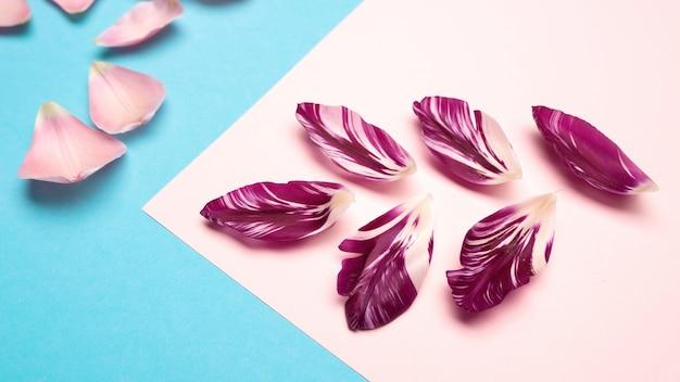 Violette en roze bloembloemblaadjes op roze en blauwe achtergrond