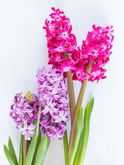 Violette en roze hyacintbloemen