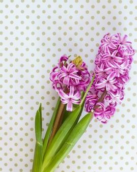 Violette hyacintbloemen