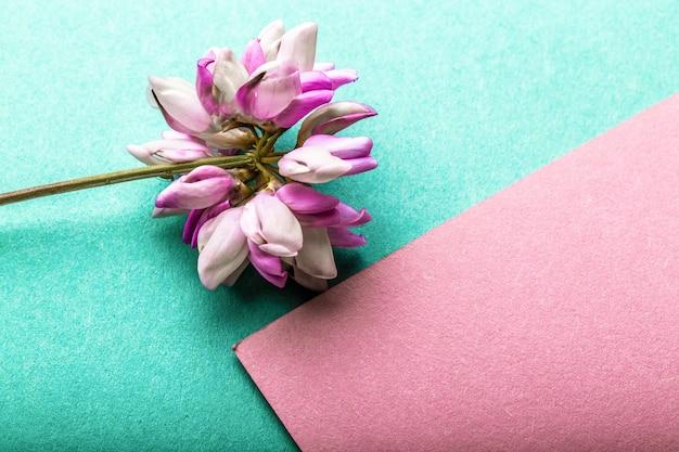Violette klaver (trifolium repens) op azuurblauwe roze achtergrond met kopie ruimte