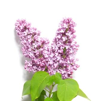 Violette lila tak geïsoleerd