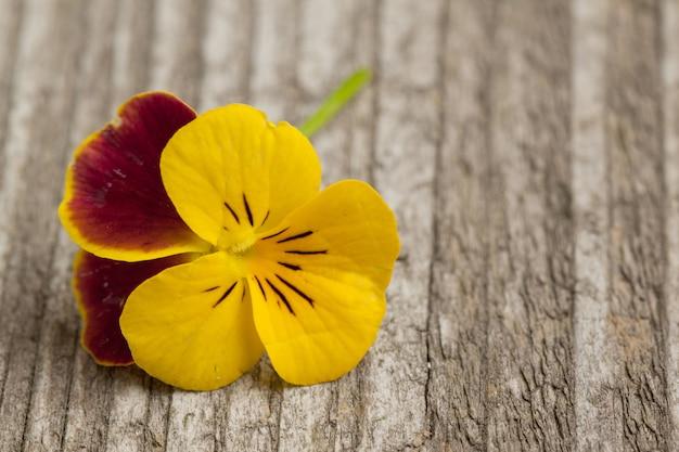 Viooltje bloem