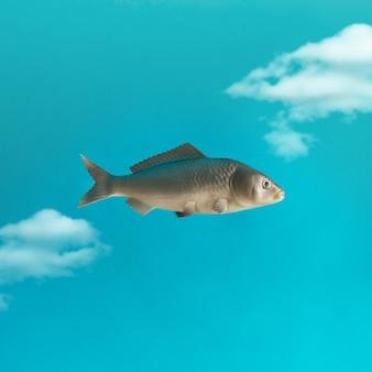 Vis in de lucht met wolken. creatief minimaal concept.
