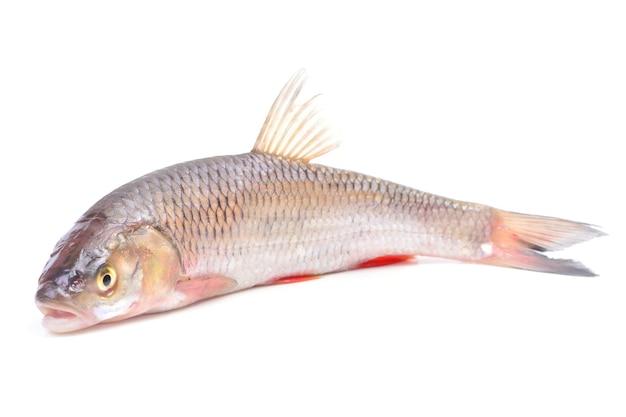 Vis kopvoorn