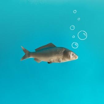 Vis op pastelblauw met hand getrokken luchtbellen.