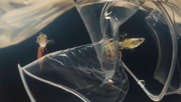 Vis probeert plastic materialen te vermijden