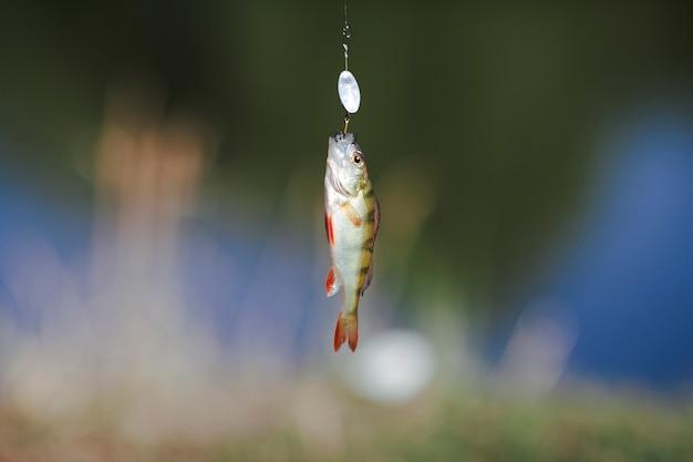 Vissen die op haak over onduidelijk beeldachtergrond hangen