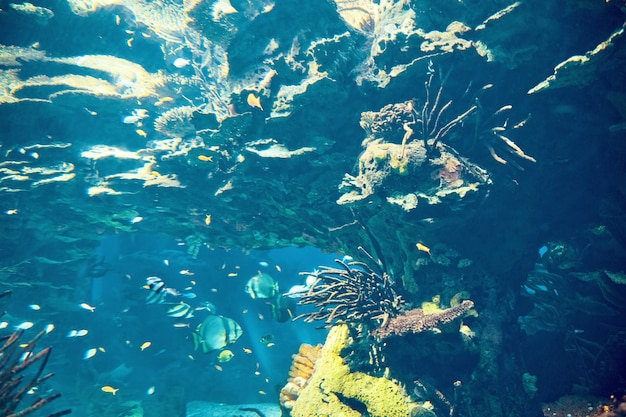 Vissen in blauw water