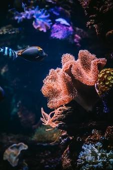Vissen in een aquarium