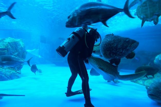 Vissen in het aquarium