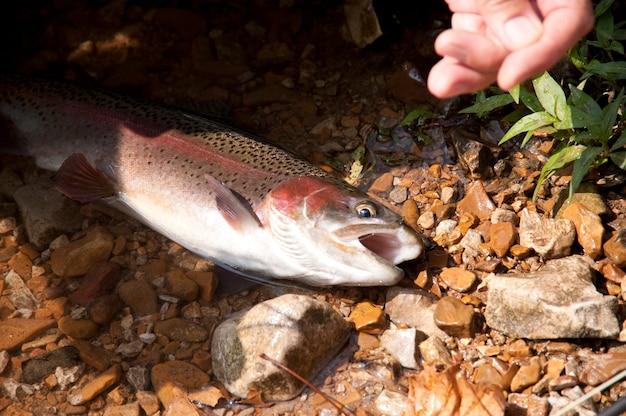 Vissen in het meer taneycomo in branson, missouri