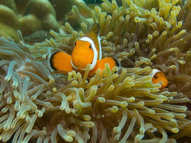 Vissen verstopt in koraalrif