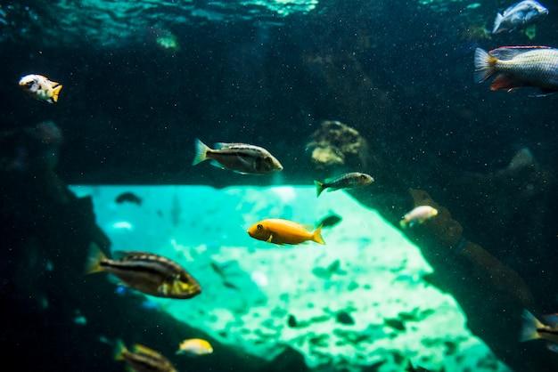 Vissen zwemmen in de zee
